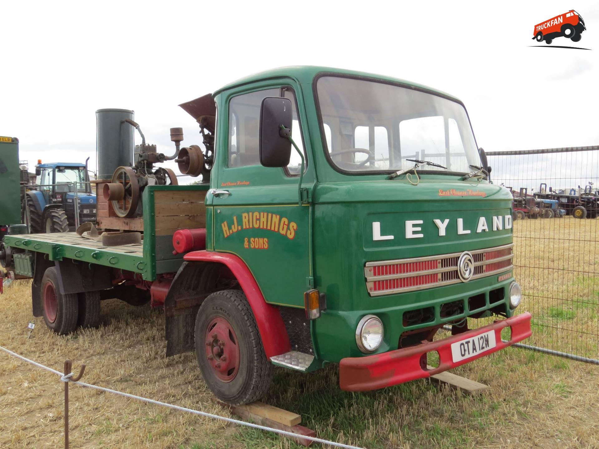 Leyland Terrier
